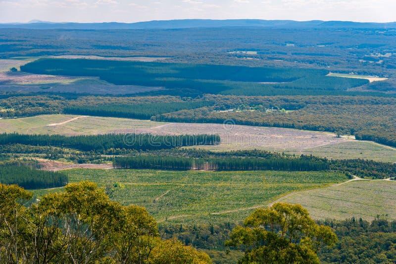 Kiefernplantagen im Berg Macedon, Victoria, Australien lizenzfreie stockbilder