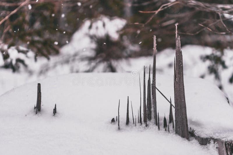 Kiefernspitzen aus hellem Holz unter dem Schneefall sehen gotisch aus stockfoto