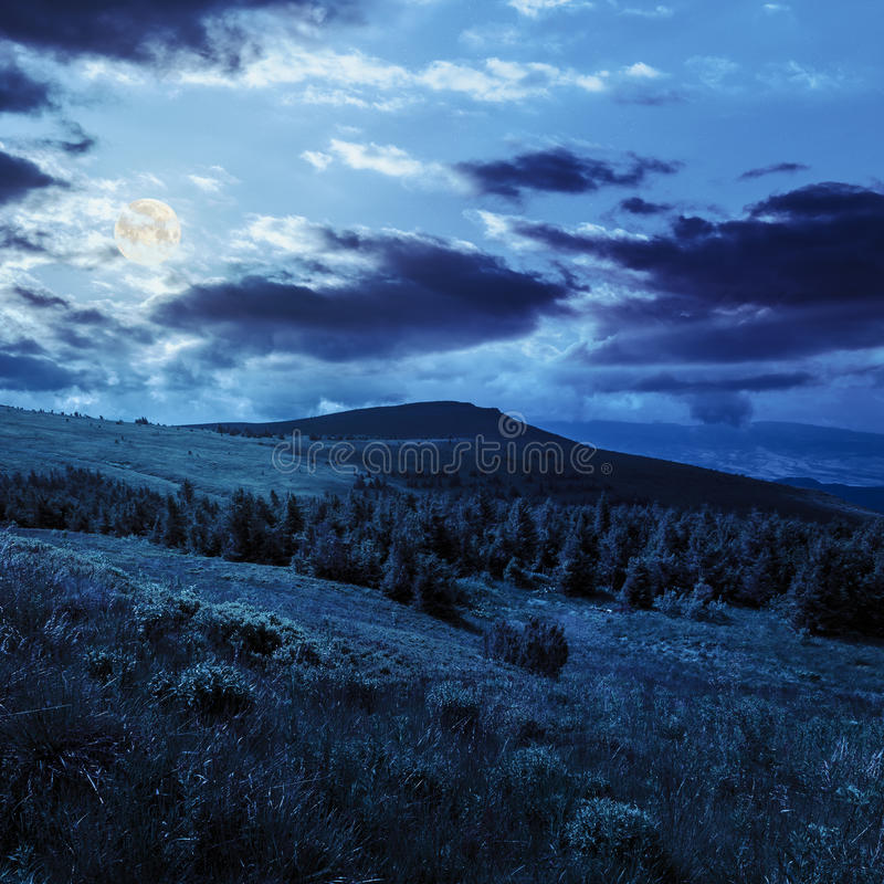 Kiefernwald auf einem Hügel nachts stockfotos