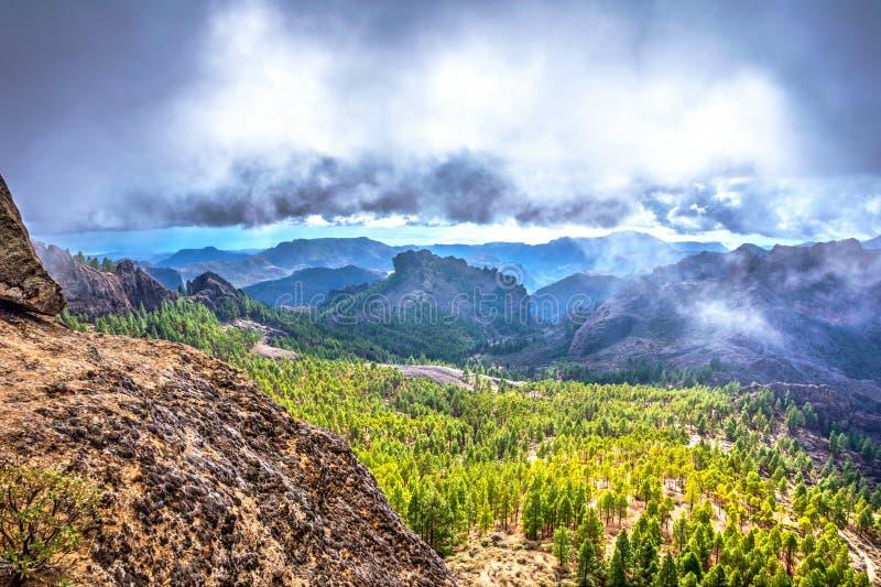 Kiefernwald, Gran Canaria, Spanien lizenzfreie stockfotos