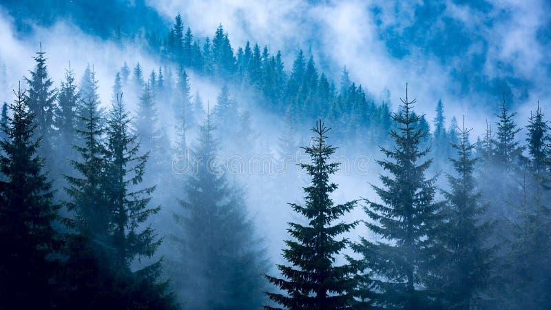 Kiefernwald im blauen Nebel stockfotografie