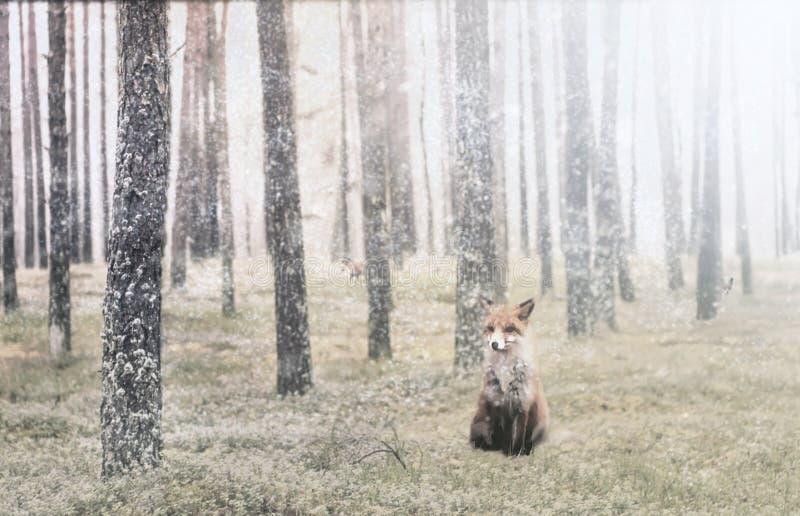 Kiefernwald und ein Fuchs lizenzfreies stockbild