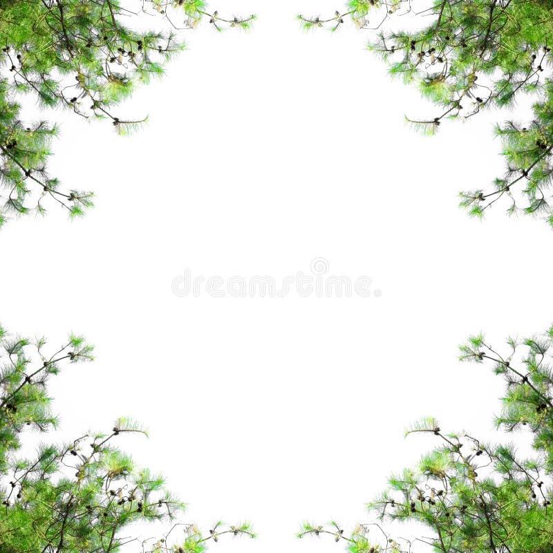 Kieferrahmen mit Leerstelle Weihnachtsgrenze mit den Tannenzweigen lokalisiert auf weißem Hintergrund stockfoto