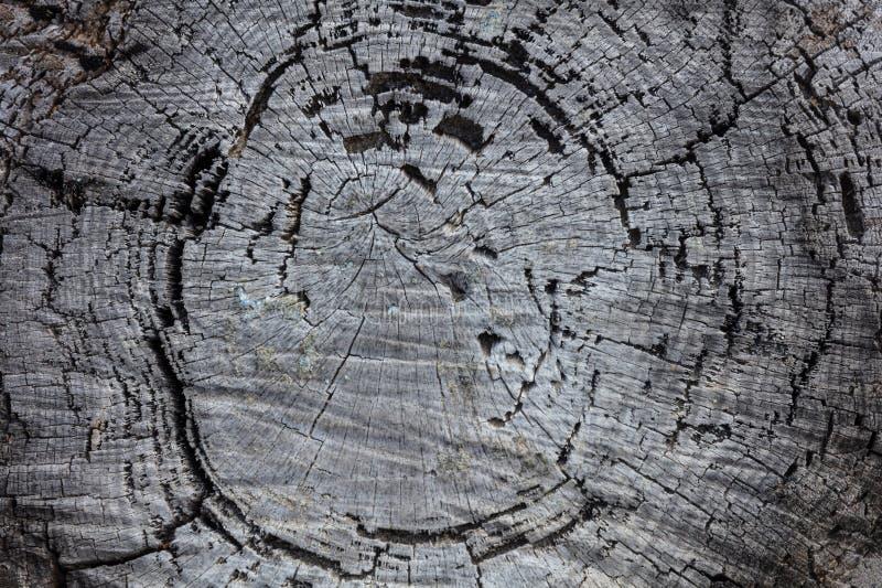 Kieferstamm-Holzhintergrund, alter verwitterter graue Farbhölzerner Stumpf stockfotografie