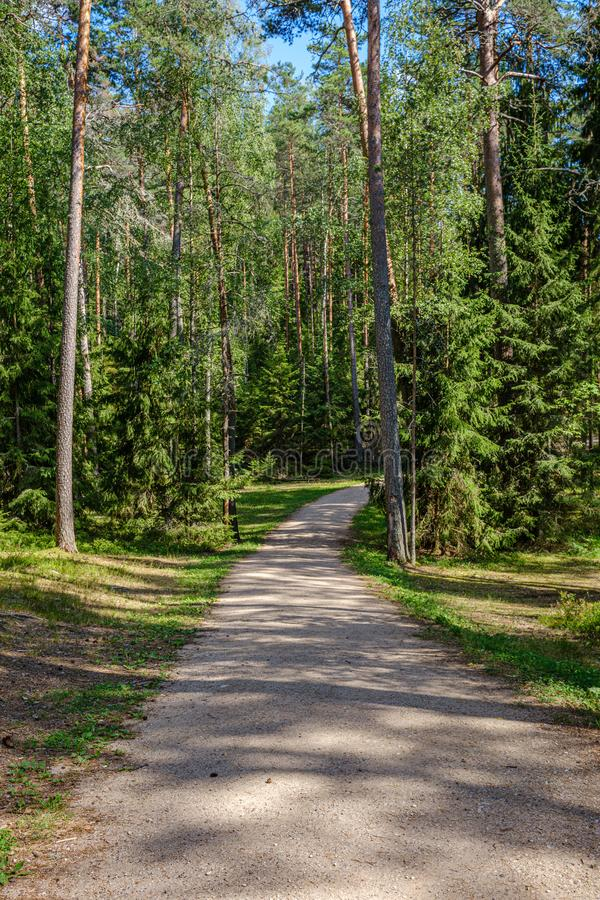 Kieferwald mit Baumstämmen und -Schotterstraße lizenzfreies stockbild