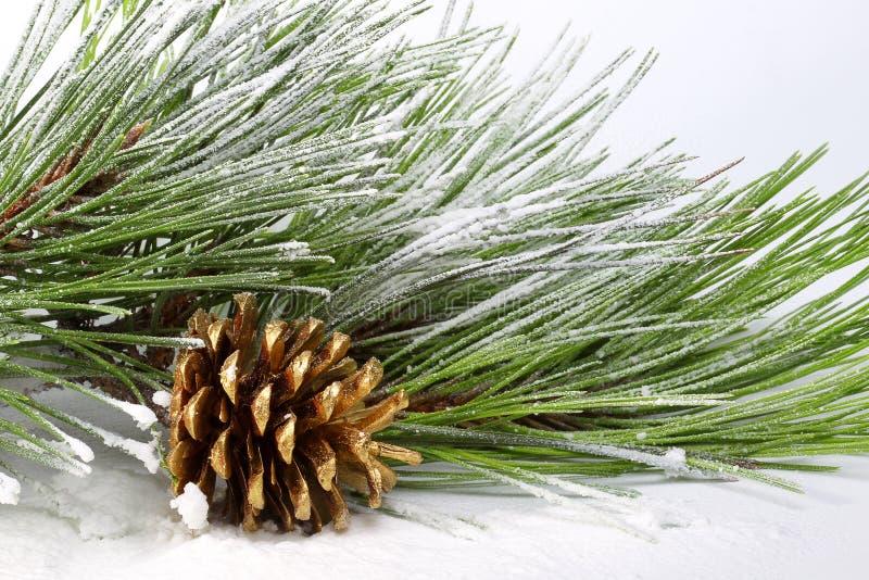 Kieferzweig mit Kegeln im Schnee lizenzfreies stockbild