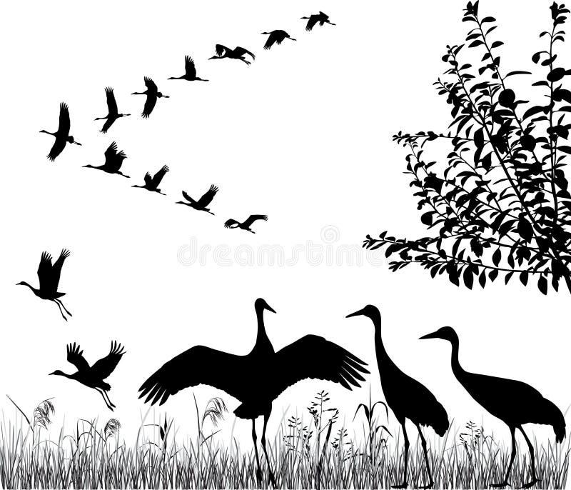 Kierdel żurawie ilustracja wektor