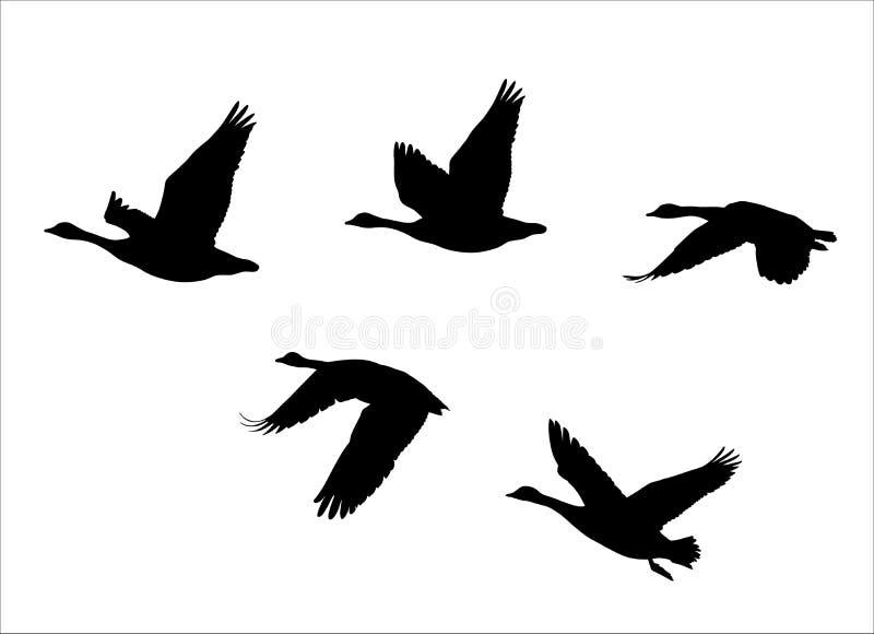 Kierdel latająca kanadyjska gąski Kanada gąska ilustracja wektor