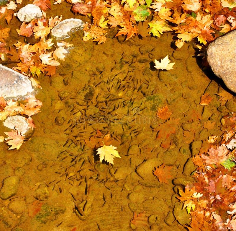 Download Kierdel Mała Ryba W Halnym Strumieniu Obraz Stock - Obraz złożonej z świeży, kierdel: 106920001