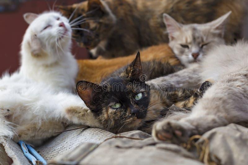 Kierdel przybłąkani koty kłama na ulicie zdjęcie stock