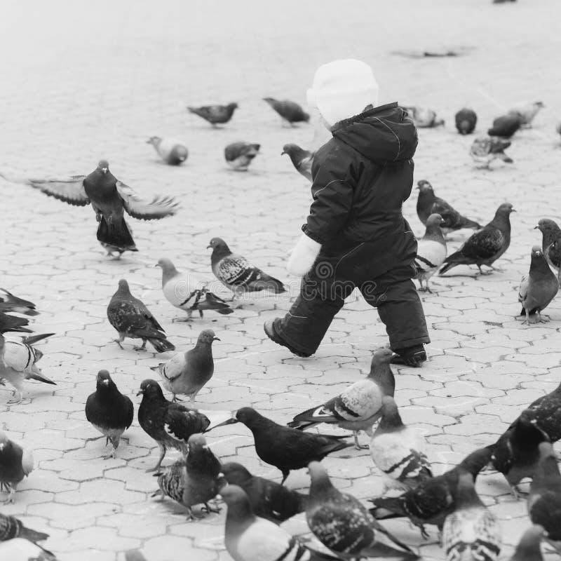 Kierdel ptaki Dzieciaka odprowadzenie w czerwień ciepłym kombinezonie z gołębiami zdjęcia stock