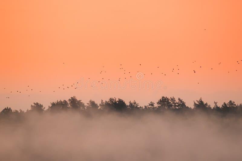 Kierdel ptaki migrujący Lata W jesieni Lub wiosny wschodu słońca koloru żółtego niebie obrazy royalty free
