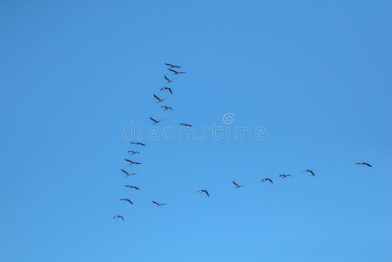 Kierdel ptaki migrujący przeciw niebieskiemu niebu zdjęcia stock