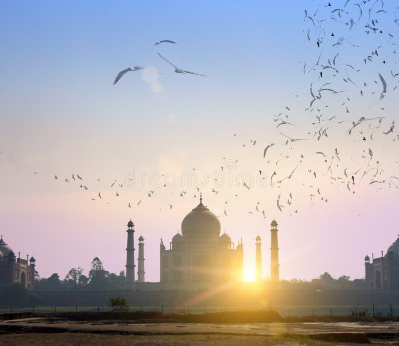Kierdel ptaki nad Taj Mahal w Agra, Uttar Pradesh, India Patrzeje w ranek mgiełce przez ogródu na opposite brzeg rzeki fotografia stock