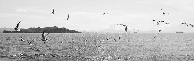 Kierdel ptaki nad wodą Czarny i biały krajobraz z ptakami i wodą zdjęcia stock