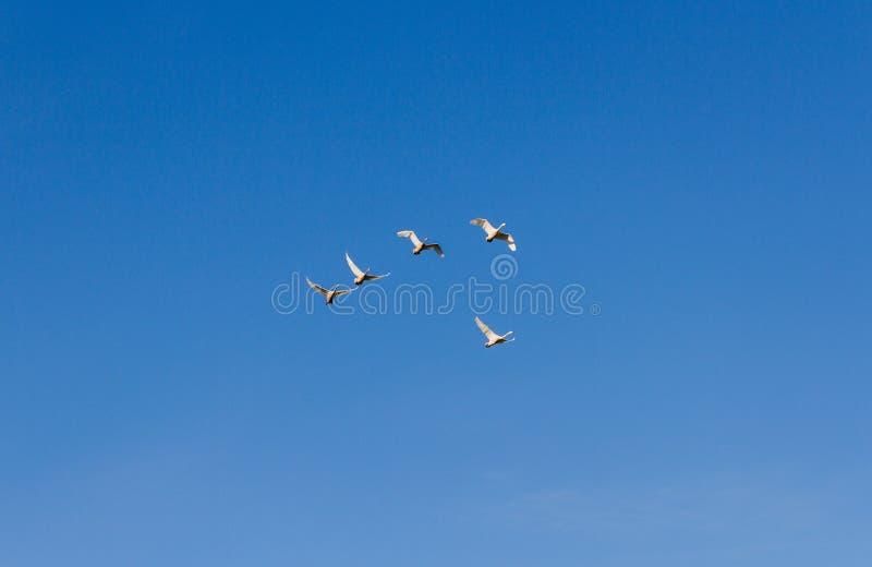Kierdel ptaki w niebie fotografia stock