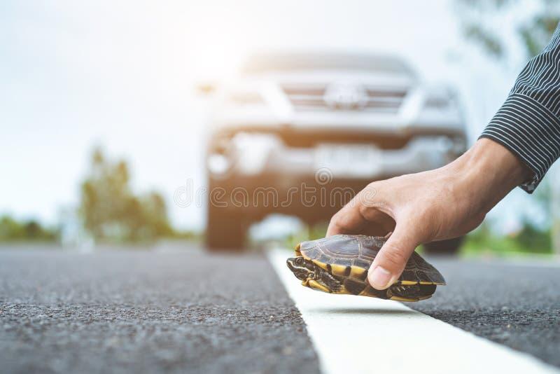 Kierowca zatrzyma samochód i pomoże żółwi w drodze Bezpieczeństwo i ostrożność podczas prowadzenia pojazdu obraz stock
