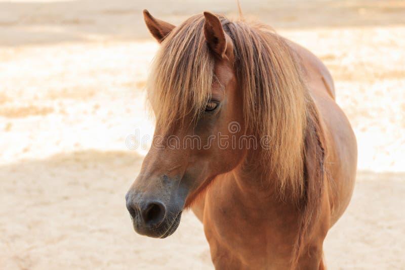 Kierowniczy brown koń stoi na rolnym tle obrazy stock