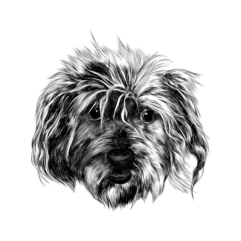 Kierowniczy kostrzewiasty pies royalty ilustracja