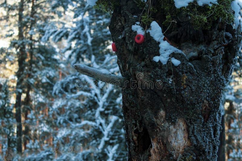 Kierowniczy lasowy drewniany czarodziejski potwór obraz royalty free