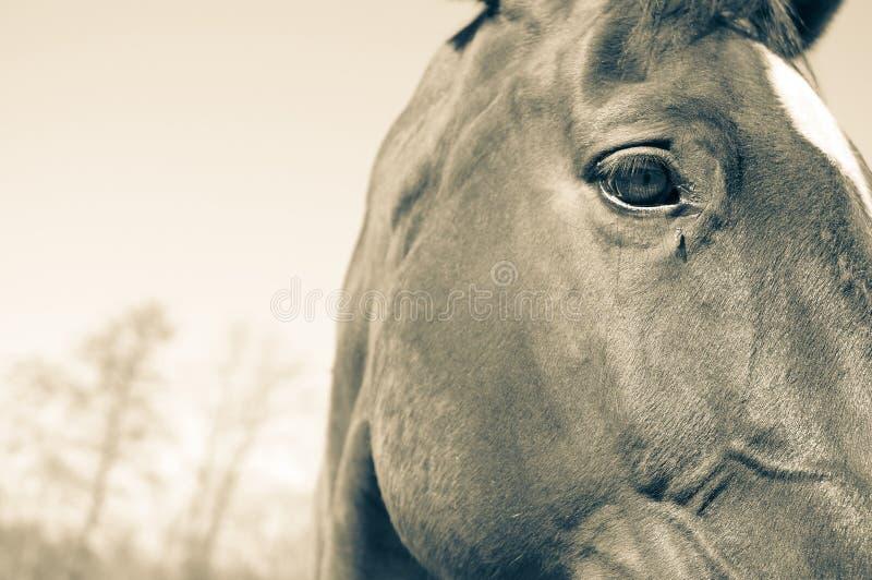 kierowniczy tło konie zdjęcia stock