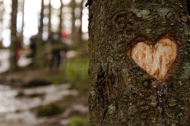 Kierowy kształt rzeźbił na drzewie w zimie obraz royalty free