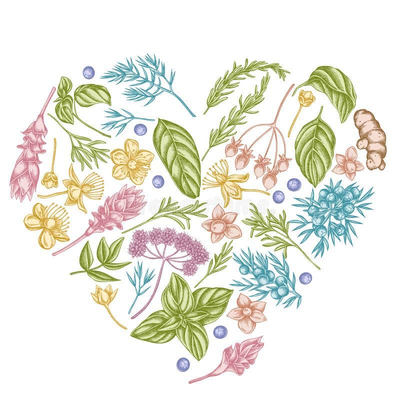 Kierowy kwiecisty projekt z pastelowym arcydzięglem, basil, jałowiec, hypericum, rozmaryn, turmeric ilustracja wektor