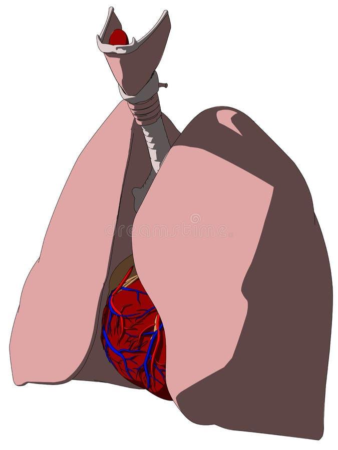 kierowy płuco ilustracji