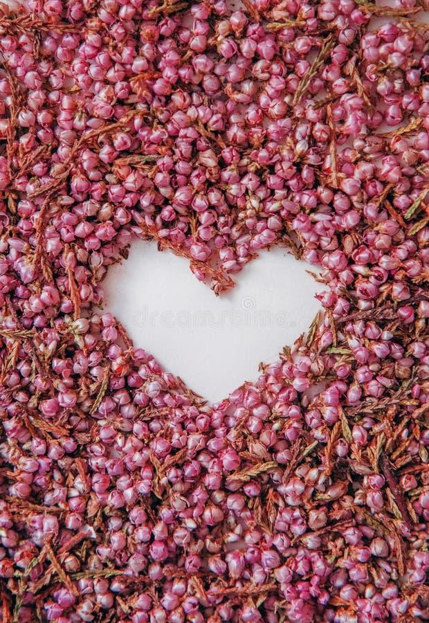 kierowych symbol miłości kwiatów płatków różane menchie pączkują obraz royalty free