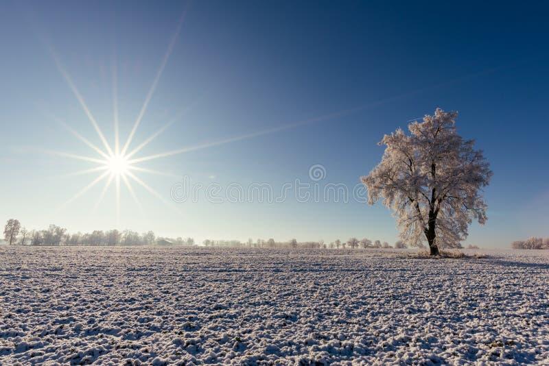 Kies alleen bevroren boom binnen op het gebied met zon op achtergrond uit royalty-vrije stock afbeeldingen