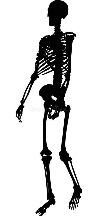 Kies silhouet van menselijk skelet uit royalty-vrije illustratie