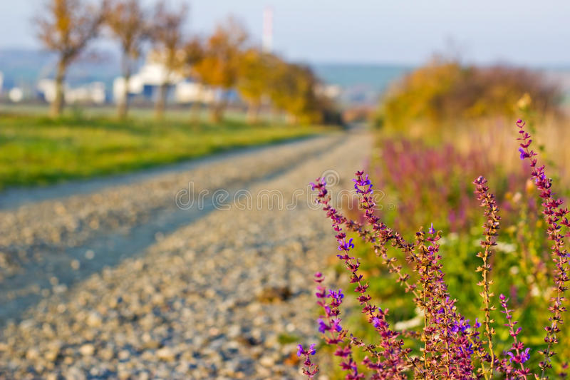 Kies-Weg im Herbst mit Violet Flowers stockfoto
