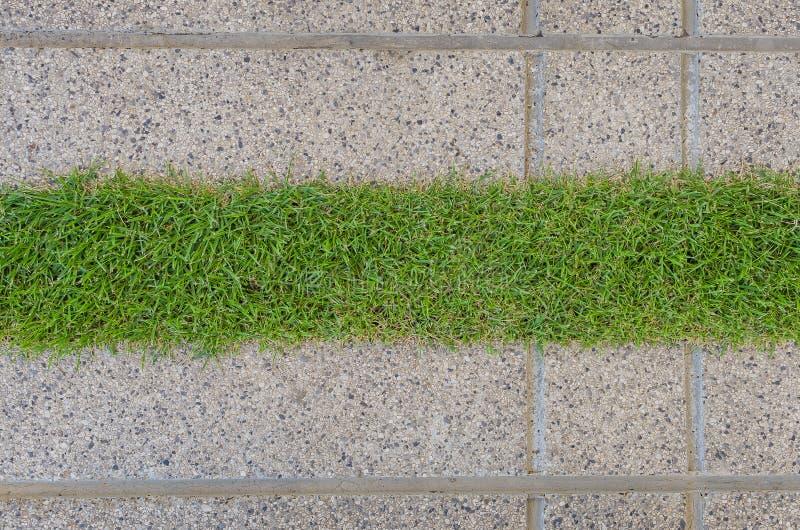 Kiesbeschaffenheit und -streifen gras lizenzfreie stockbilder