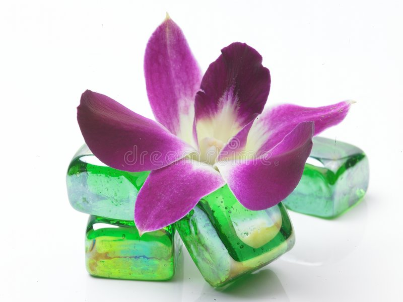 Kiesel mit Blume stockbild