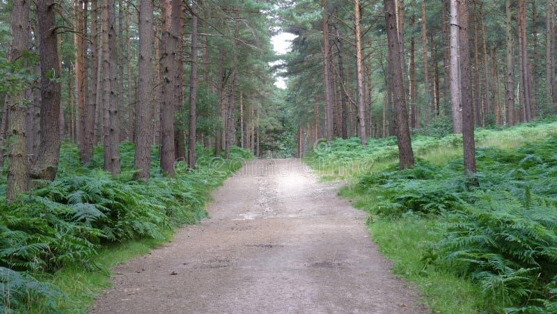 Kiesweg auf einem Waldweg stockfoto