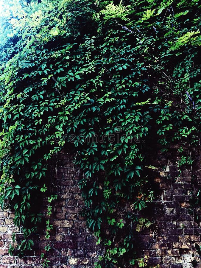Plants on wall royalty free stock image