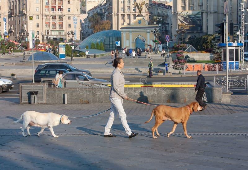 Kiev, Ucrânia - 11 de setembro de 2013: Mulher com passeio de dois cães foto de stock