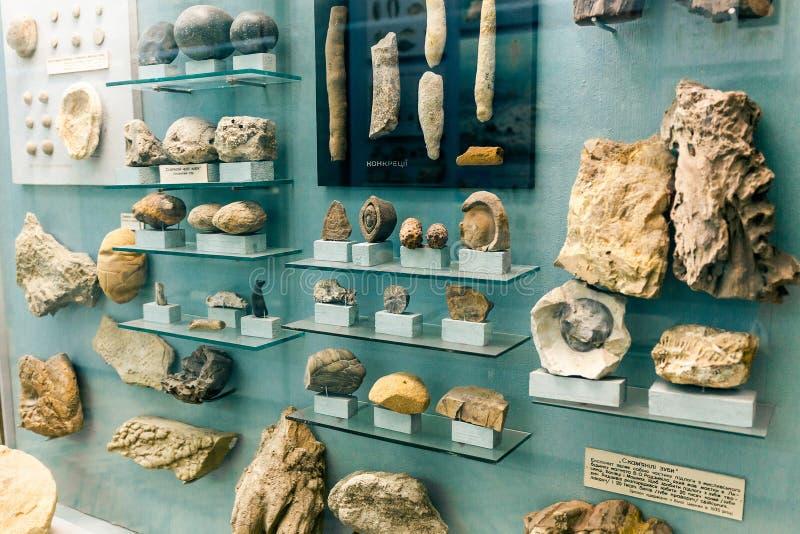 KIEV, UCRAINA - 16 GIUGNO 2018: Museo nazionale delle scienze naturali dell'Ucraina Animali fossili antichi petrificati fotografia stock libera da diritti