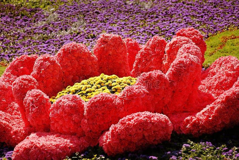 KIEV, UCRANIA - 23 DE AGOSTO: exposición de la flor en Kiev, Ucrania fotos de archivo libres de regalías