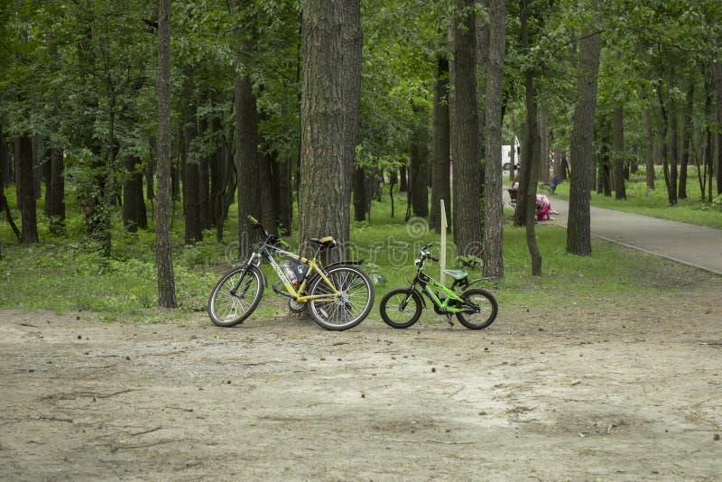 Kiev Ucrania - 26 de mayo de 2019: Dos bicicletas aparcadas cerca de los árboles sobre el verde césped brillante en un parque imagenes de archivo