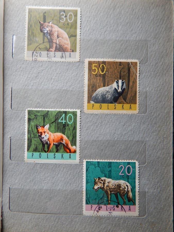 KIEV UKRAINA - APRIL 16, 2019: Samling av portostämplar med djur arkivfoto