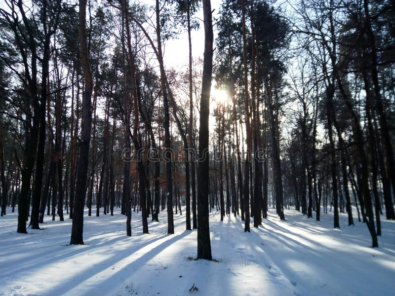 Kiev, Winter Forest royalty free stock photo