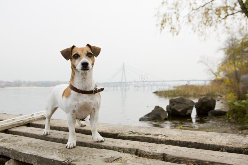 Kiew-Hundegehen lizenzfreies stockbild