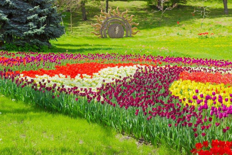 Kiew, Ukraine - 23. April 2016: Mehrfarbige Tulpen in der Landschaft parken auf einem Tulpen exhibitio stockfotos