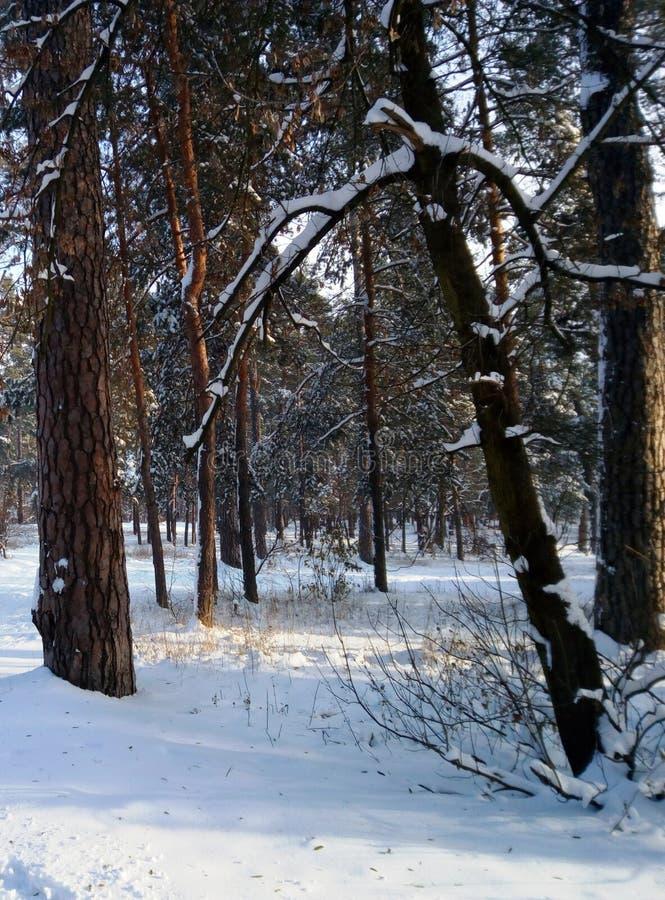 Kiew, Winter lizenzfreies stockbild