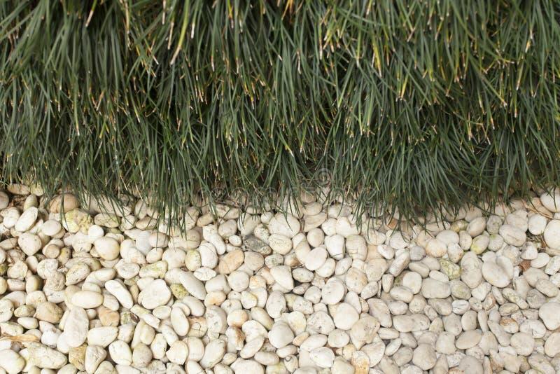 Kiezelsteen en gras royalty-vrije stock afbeeldingen