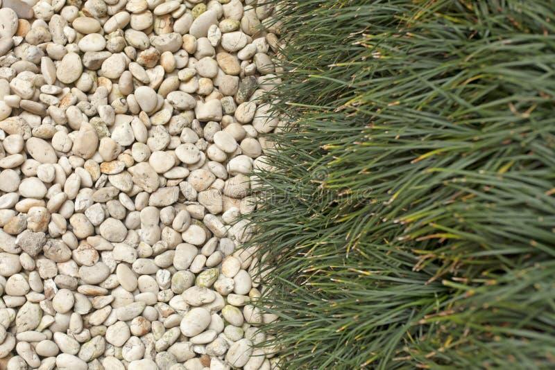 Kiezelsteen en gras stock afbeeldingen