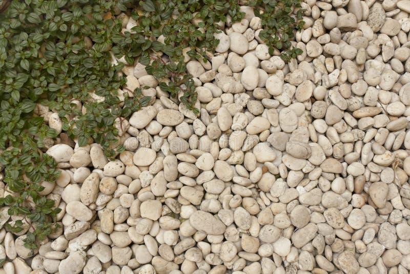 Kiezelsteen en gras royalty-vrije stock afbeelding