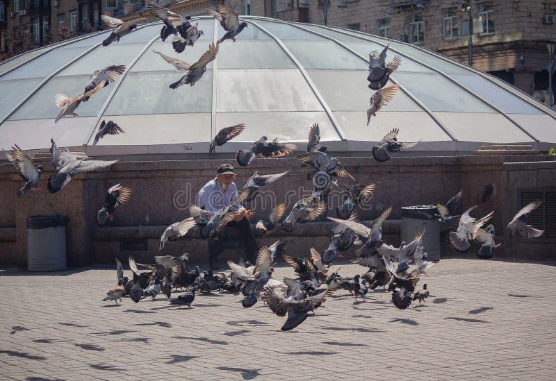 Kijów Ukraina, Czerwiec, - 10, 2018: Osamotnionego mężczyzna żywieniowi gołębie zdjęcie stock