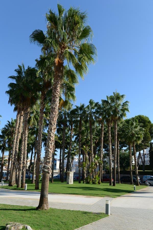 Kij golfowy w Orihuela Costa zdjęcia stock